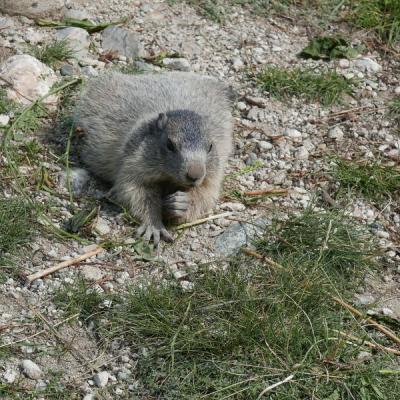 2018 - Balade estivale sur le sentier des marmottes