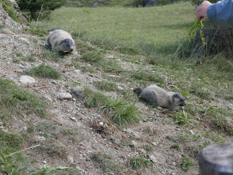 18 août 2018 - Balade sur le sentier des marmottes
