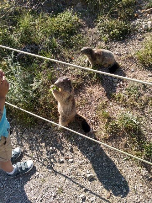 Marmottes et l'enfant