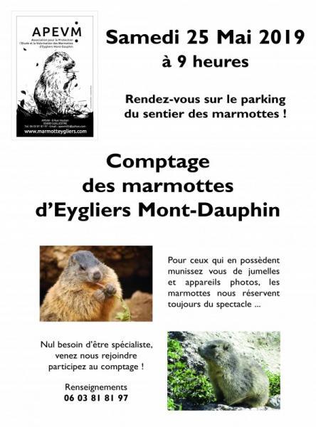 Affiche comptage marmottes printemps 2019