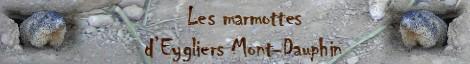 Banniere marmottes
